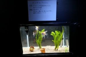 30.桜山祭文化の部019